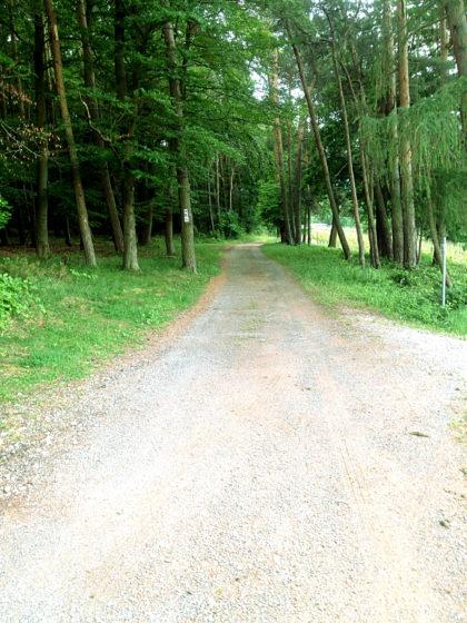 Keine zwei Kilometer mehr bis Miltenberg