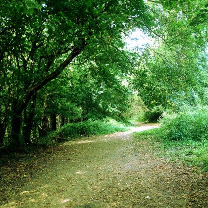 Der Rückweg nach Neckargerach führt durch schönen Wald