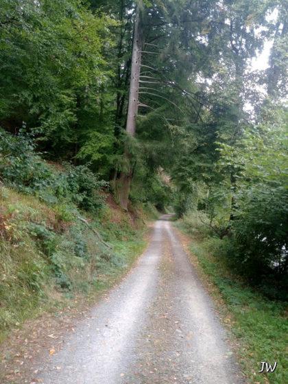 Der Weg führt uns nun in den Wald hinein