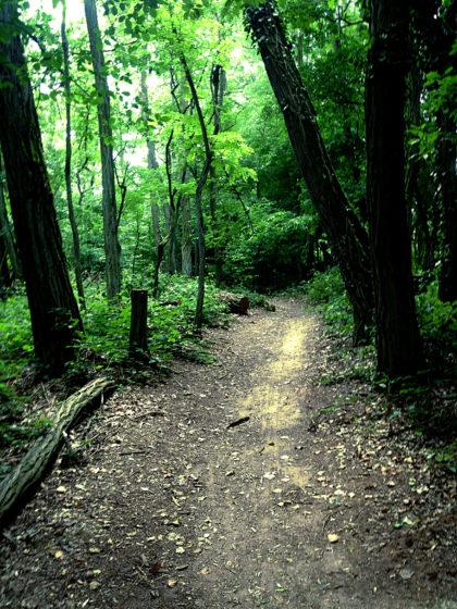 Die ersten Schritte im Wald