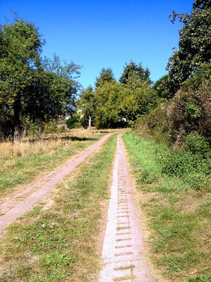 Hinauf nach Münchwies, dort biege ich dann vom Brunnenpfad ab