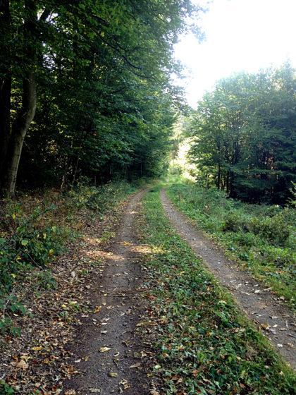 Zuweg Richtung Mühlenpfad