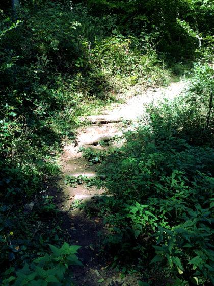 Der Mühlenpfad ist nur etwa 8 Kilometer lang