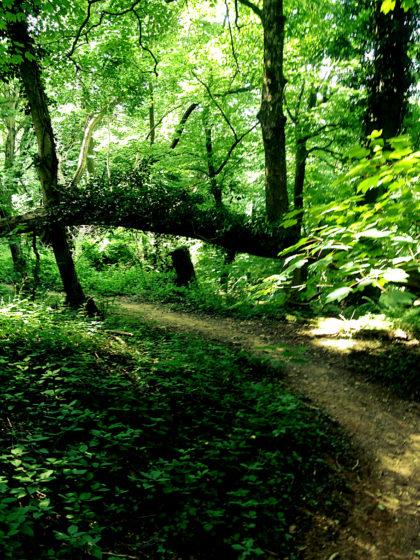"""Under the Greenwood tree"""