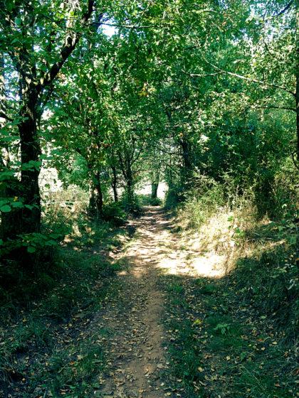 Der Wald ändert häufig sein Erscheinungsbild