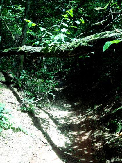 ...und dunkler Wald wechseln einander ab