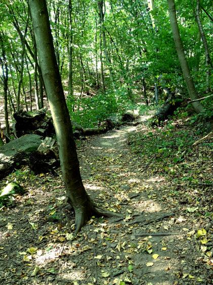 Auch der Steinbachpfad ist ca. 8 Km lang