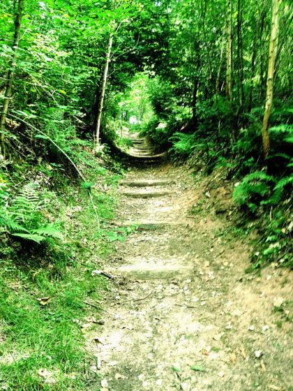 Letzte Waldpassage