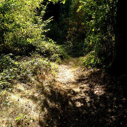 Der Steinbachpfad führt fast ausschließlich durch Wald