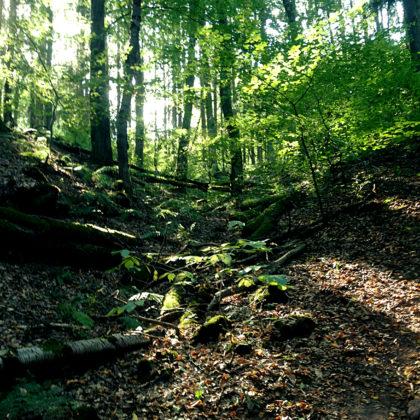 Ich fühle mich in eine alte Waldläufergeschichte versetzt