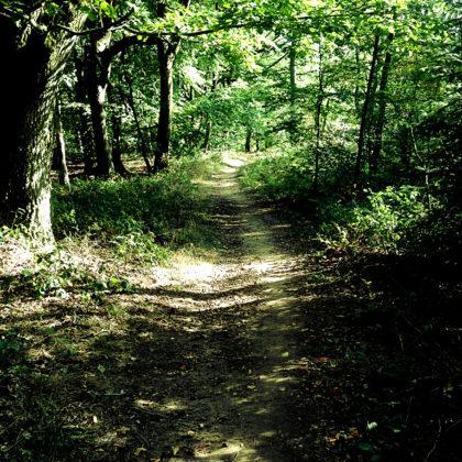 Auf ein paar Kilometern verlaufen Steinbachpfad und Premiumweg Nummer vier für heute - der Schauinslandweg - parallel