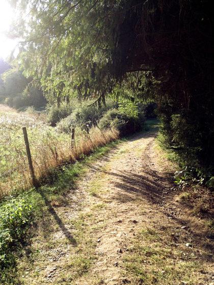 Auf dem letzten Kilometer des Schauinslandweges