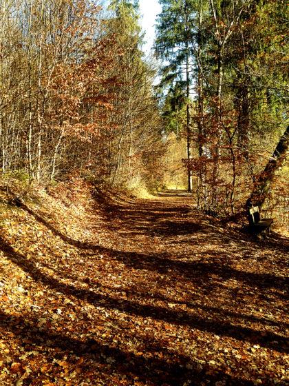 Dann auf einem hellen Herbstpfad...