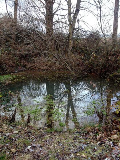 Der Ziehborn, eine der Quellen des Ohligsbaches, den ich vorhin überquert habe
