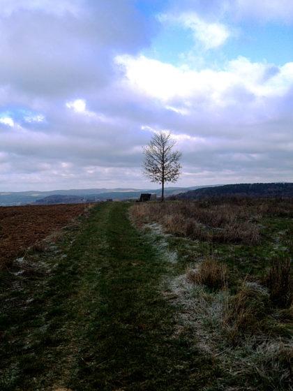 Windland mit einzelnem Baum