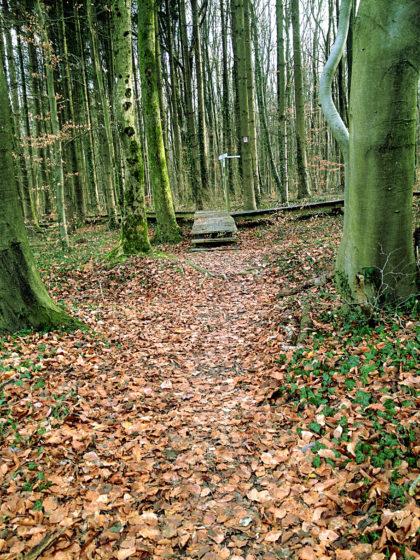 """Der """"Wilde-Wald-Weg"""", dem der Bietzerberger auf ca. 1,5 Km folgt"""