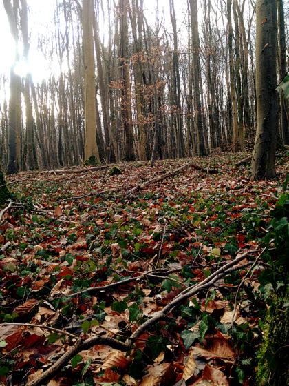 """...denn der """"Wilde-Wald-Weg"""" ist das Herzstück dieses Wanderpfades"""