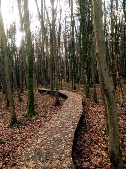 Meistens bewege ich mich auf solchen Holzstegen voran
