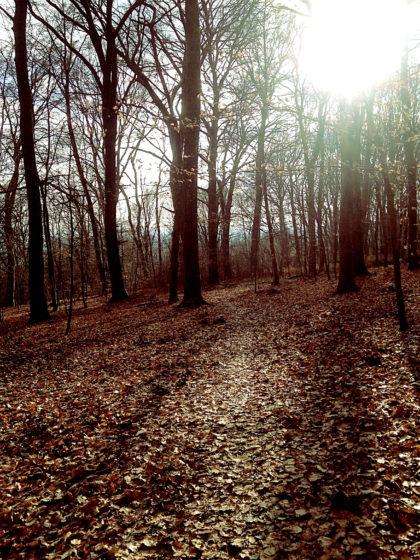 Die Sonne brennt die Baumspitzen weg