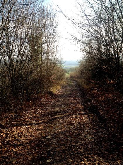 Raus aus dem Wald