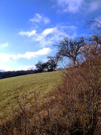 Jetzt wandere ich eine ganze Weile über Wiesenpfade