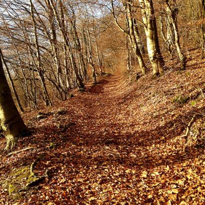 Jetzt sogar ein Herbstwald mit beinahe noch goldgelbem Laub