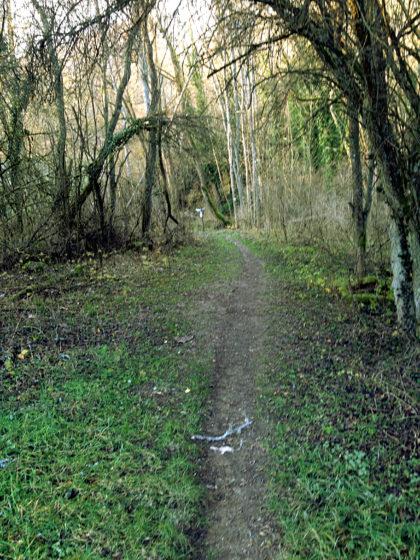 Ein letztes Mal Wald