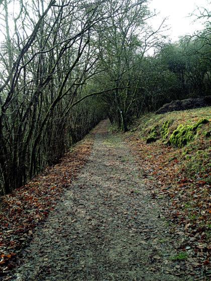 Hier verläuft auch der ca. 15 Km lange Grenzblickweg