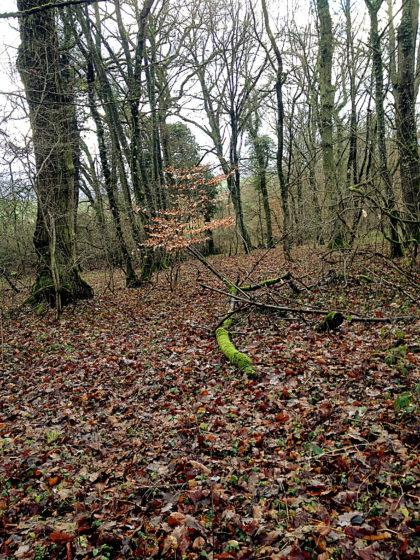 Der Wald sieht gleich viel ansprechender aus