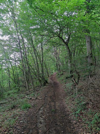 Für ein paar Kilometer ist der Bietzerberger identisch mit den Beckinger Saarblicken