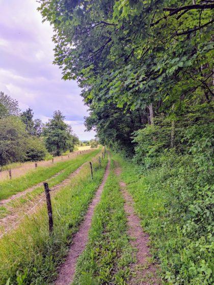 Naturschutzgebiet Wolfertskopf