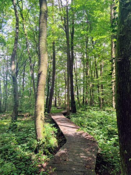 Die Holzstege sind eines der Highlights dieses Wanderpfades