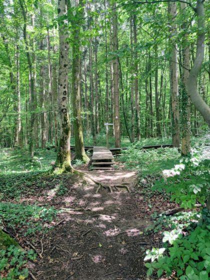 """Beginn des """"Wilder-Wald-Weges"""""""