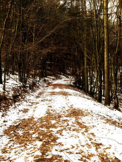Unten angekommen und gleich wieder in den Wald hinein