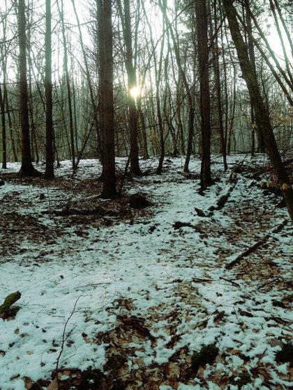 Immer wieder der Blick in den offenen Wald hinein