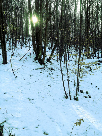 Schneelicht