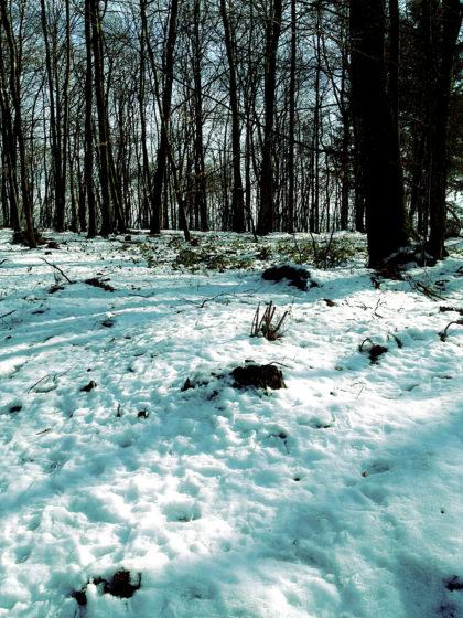 Schneeidylle