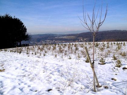 Ich befinde mich wieder oberhalb von Limbach