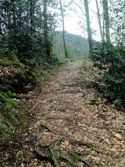 Noch ungefähr drei Kilometer bis zum Zielpunkt der Wanderung