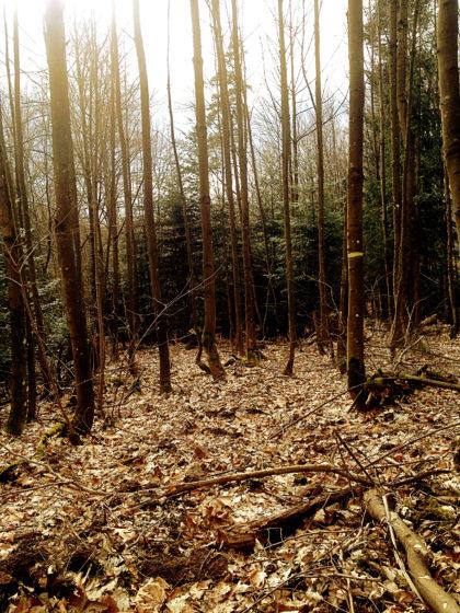 Noch ein letzter Waldblick