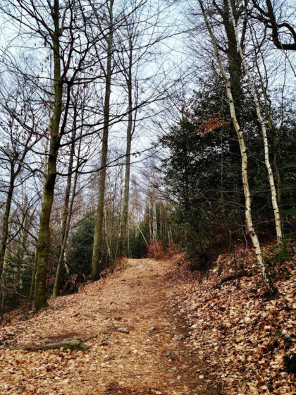 Vom Alten Schloss führt der Weg weiter bergauf