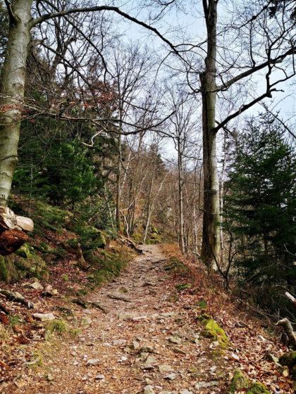 Ih befinde mich hier übrigens im Nationalpark Schwarzwald