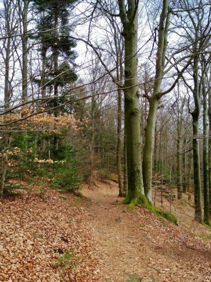 Schöne, schmale Waldpfade