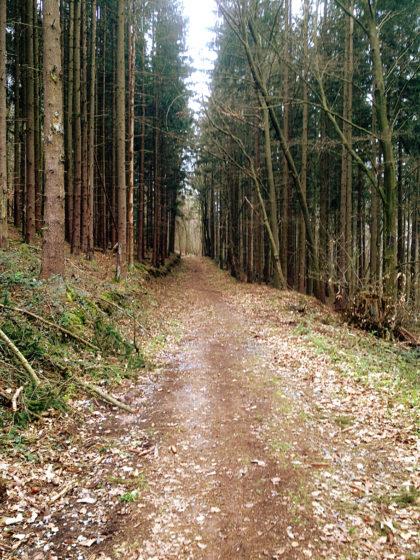 Wieder in den Wald hinein