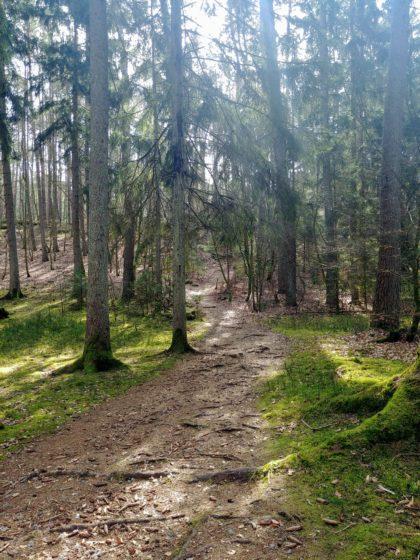 Der Wald ist das bestimmende Element der Schlossbergtour