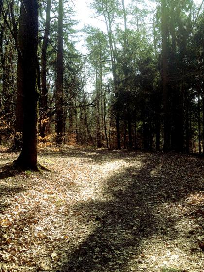 Dann aber Wald, und gleich ein richtig schöner
