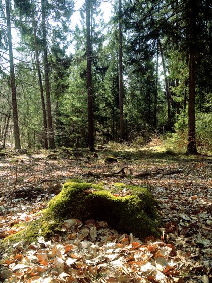 Die ersten sechs Kilometer der Schlossbergtour führen beinahe ausschließlich durch einen richtig schönen Frühlingswald