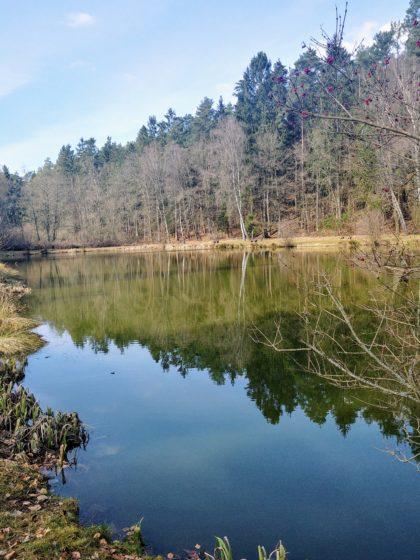 Fischweiher unweit von Kirrberg