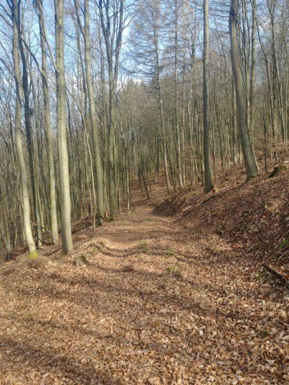 Ich befinde mich jetzt nicht mehr auf der Schlossbergtour, sondern schlage einen großen Bogen, an Kirrberg vorüber und zurück zum Fischweiher
