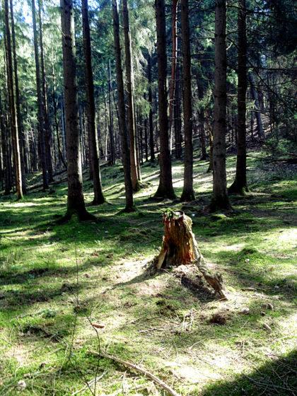 Vorher aber noch mal ein Blick ins Herz des Waldes